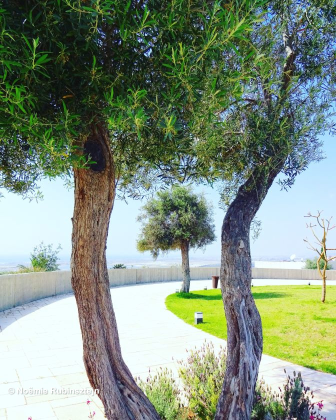 This photo was taken in a hotel near Zichron Yaakov in Israel. Its garden is modern and marvelous.