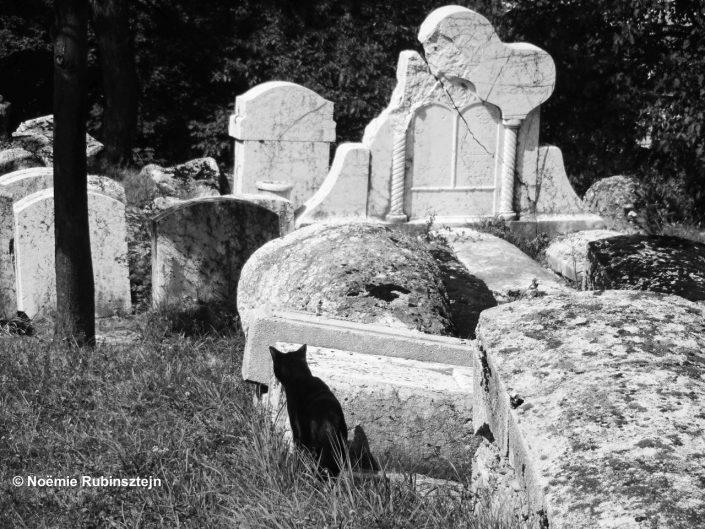 This photo was taken in Sarajevo in its centuries-old Jewish cemetery.