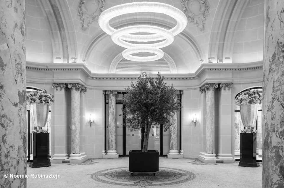 This photo was taken in one of the halls of a hotel in Paris and feautres a tree which seems to be hula hooping as there are three enlightened circles running around its head.