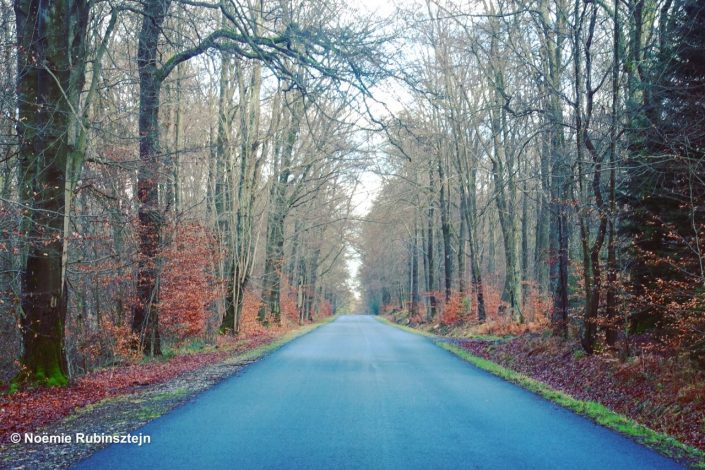 This photo was taken on the road near Spa in Belgium and features the typical Belgian fall colors in the woods.