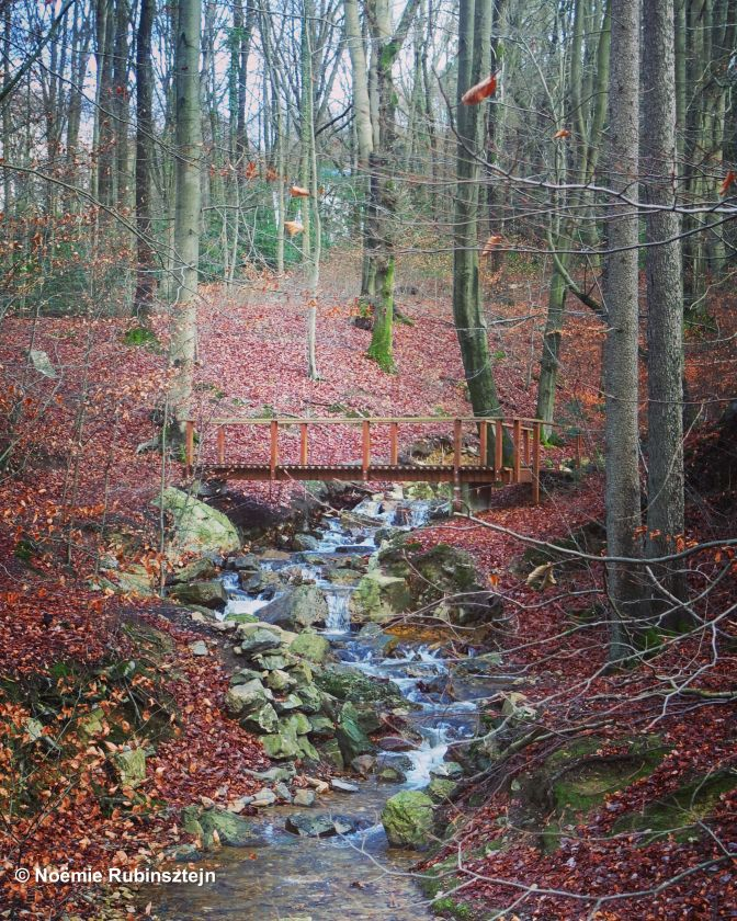 This photo was taken near Spa in Belgium and features the typical Belgian fall colors in the woods.