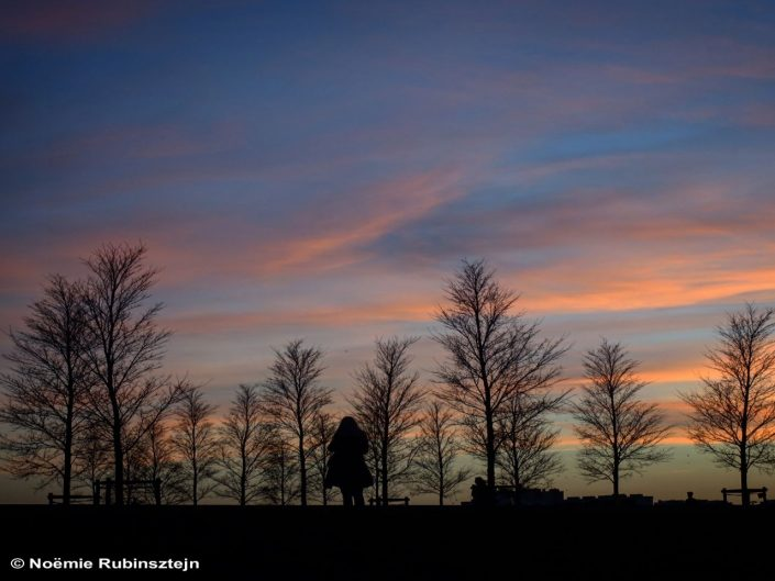 This photo was taken in Antwerp Belgium and features a colorful sky, which looks like a brush of paint. The trees seem to tickle the sky.